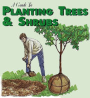 Planting Trees and Shrubs Guide